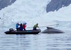 Examining Southern Hemisphere Humpback Whale Migratory Routes from Foraging to B