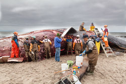 Dead Whales Do Tell Tales, Moe Flannery