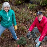 Restore Creeks for Coho Salmon: Restoration Volunteer Day