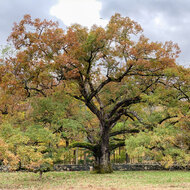 The Marin Art and Garden Center presents The Nature of Oaks with Douglas Tallamy