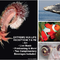 Extreme Sea Life Soirée presented by Farallones National Marine Sanctuary & Bay