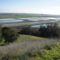 Bay Trail Walk to Bird Overlook, Hamilton Field