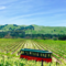 Vineyard Tours & Dinners