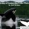 Ecology of Transient (Bigg's) Killer Whales, Josh McInnes - American Cetacean So